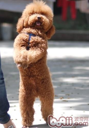 如何训练狗狗使其乖巧听话