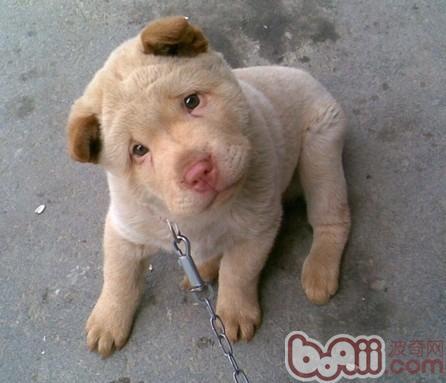 如何训练狗狗固定地点排便