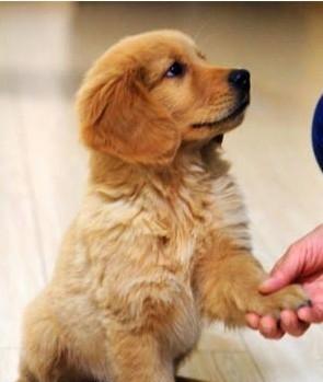 训练幼犬的最佳时间