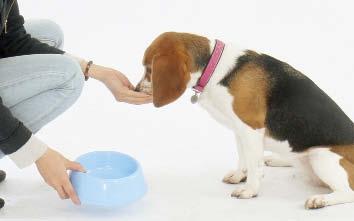 狗狗挑食都是主人惯出来的毛病