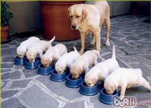 如何训练狗狗优雅进食