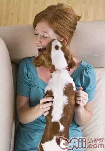 狗狗不礼貌乱舔人怎么办