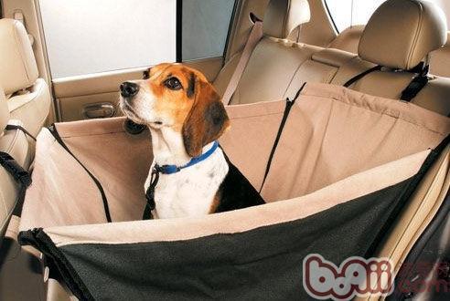 训练狗狗不晕车的方法