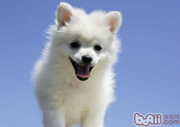 培养狗狗习性的8大要点