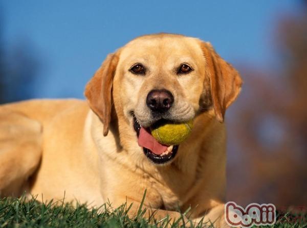 在家如何训练狗狗学会基础技能