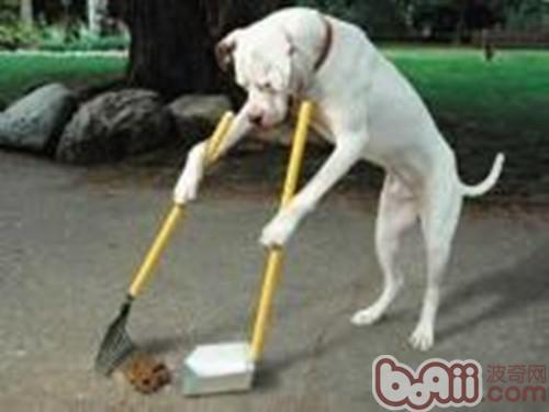 狗狗定点排便常见问题答疑