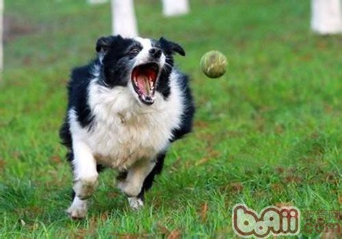 狗狗训练第一步:服从主人