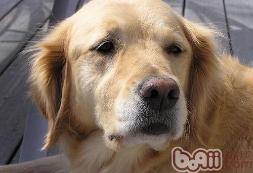 怎样训练狗狗学习等待