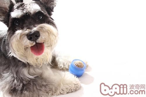 狗狗磨牙期该如何防止其咬人