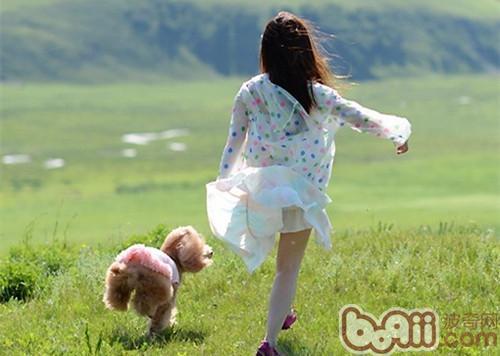 如何训练狗狗不乱跑