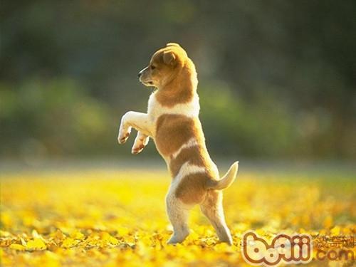 训练狗狗时的正确奖励方式