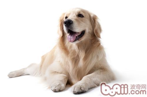 狗狗舔人不止的训练