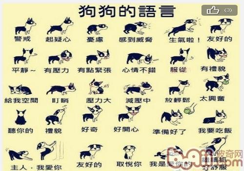 狗狗的语言