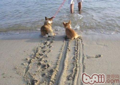 如何帮助狗狗克服怕水心理