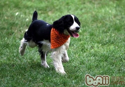 【测试】对狗狗胆量的小测试