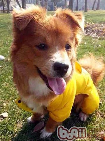 不是狗狗没学好,而是训练没技巧