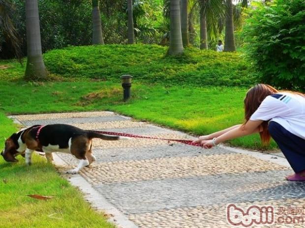 如何应对狗遛人的情况
