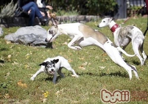 如何给狗狗合适的运动量