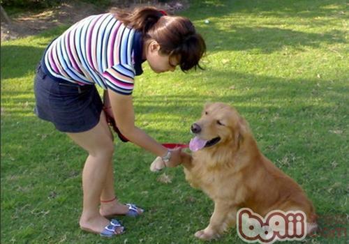 训练狗狗的误区