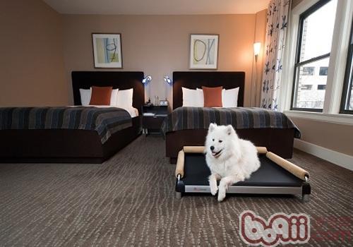 如何阻止狗狗往床上爬