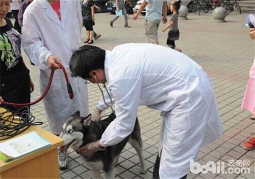 狗狗不配合医生检查怎么办