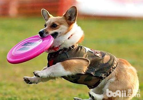 狗狗体型不同训练方式有何差异