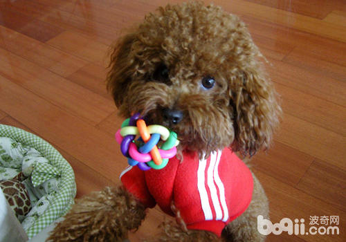 如何利用狗狗的天性