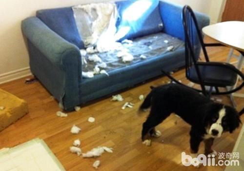 怎样改正狗狗乱吃东西的坏习惯