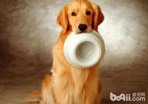 如何训练狗狗好好用餐