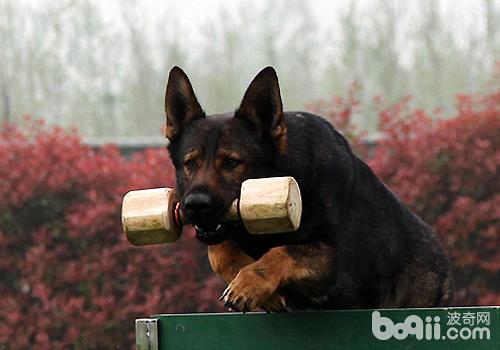 如何防止狗狗兴奋过度