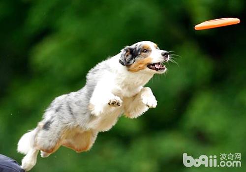 狗狗训练的注意点