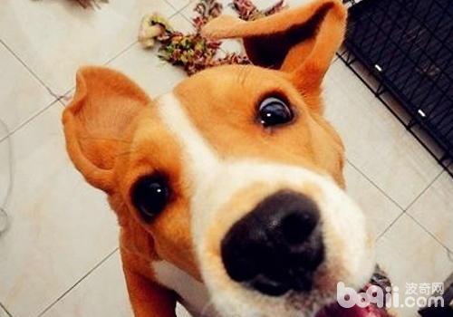 狗狗常见陋习的纠正方法
