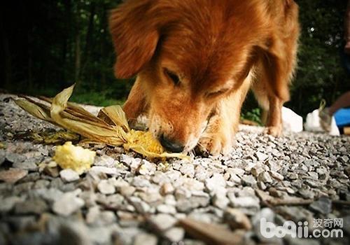 如何做好狗狗的拒食训练