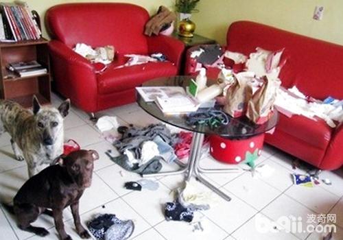 怎样防止狗狗破坏家具