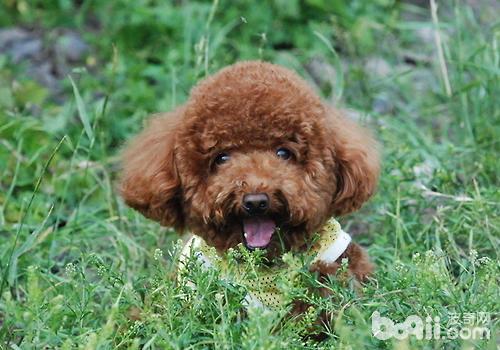 训练狗狗的几个要素