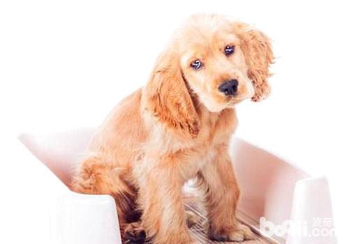 怎么让狗狗用狗厕所