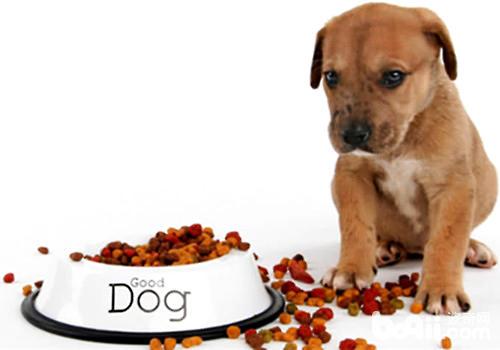 如何训练狗狗拒食不捡食