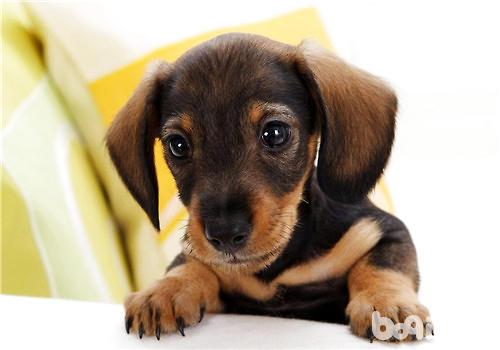 狗狗航空箱训练不该做的几件事