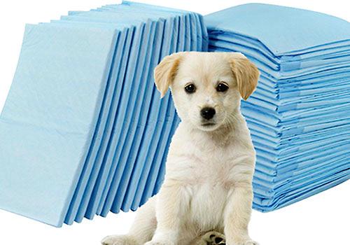 怎么教狗狗使用尿垫