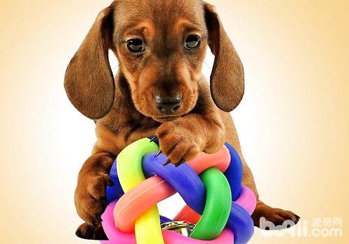 狗狗玩具被咬着不放该怎么办