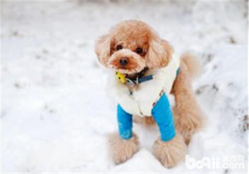 狗狗玩具球的形状及功能介绍