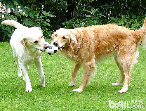 三种常见狗狗玩具球介绍
