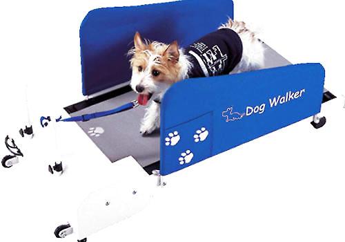 如何训练狗狗在跑步机上跑步