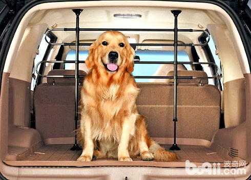 带狗狗自驾游需要注意什么