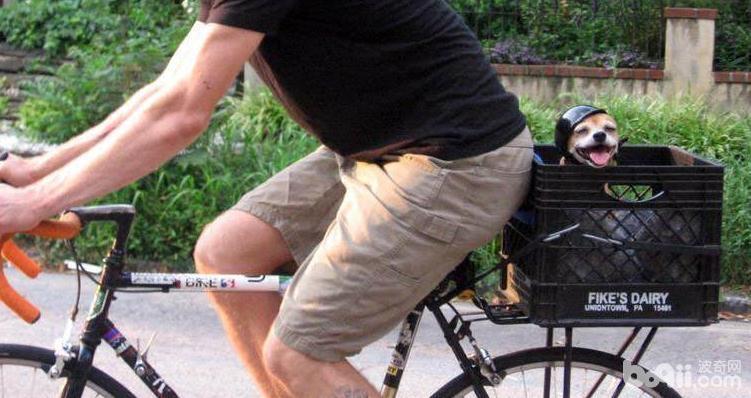 怎么训练狗狗坐自行车 狗狗坐自行车的技巧有哪些
