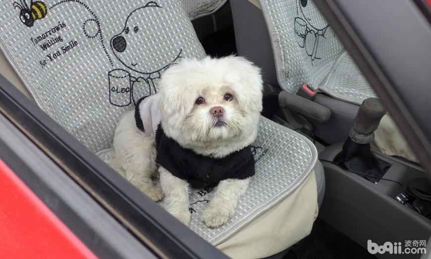 怎样让狗狗乖乖坐车,让狗狗乖乖坐车的方法有哪些?