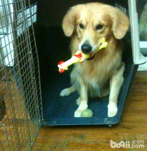 狗狗社会化训练 狗狗怎么训练