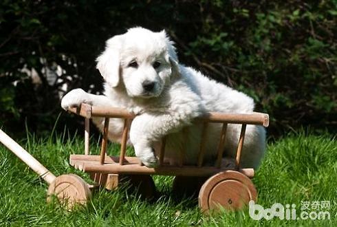 怎么调教出一只优秀的狗狗?训练狗狗的秘诀
