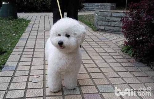 狗狗大小便怎么训练 狗狗大小便训练方法