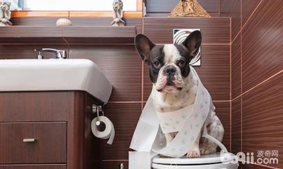 训练狗狗定点定时排便的注意事项都有哪些?